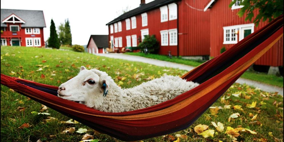 Oslo 20060906 Reise-VG fra Den Gyldne Omvei som ligger på Inderøy i Nord-Trøndelag. Kirsti og Svein Bærfjord driver eget slakteri og gårdsutsalg på Berg Gård ved Kjerknesvågen FOTO: MAGNAR KIRKNES